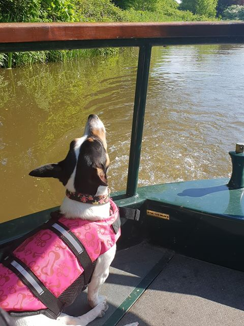 a dog stares into the distance from the prow of a narrowboat