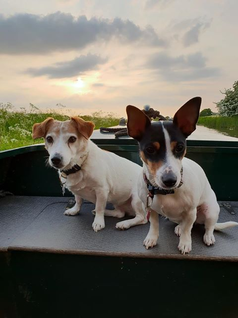 Two jack russell dogs sit together in the prow of a narrowboat against a bakdrop of an early morning sky and spring wildflowers on the banks of the lancaster canal